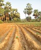 Agricoltura in Asia Sud-Orientale Fotografia Stock Libera da Diritti
