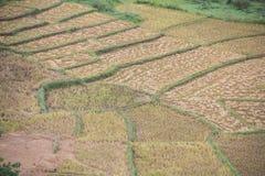 Agricoltura in asiatico Immagini Stock