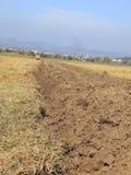 agricoltura astratta Immagini Stock