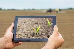 Agricoltura astuta Agricoltore che per mezzo della compressa Danno da gelo alle piante fotografia stock libera da diritti