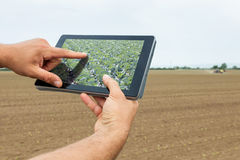 Agricoltura astuta Agricoltore che usando piantatura del cavolo della compressa moderno immagine stock