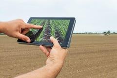 Agricoltura astuta Agricoltore che usando piantatura del cereale della compressa Agr moderno Immagini Stock