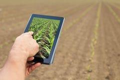 Agricoltura astuta Agricoltore che usando piantatura del cereale della compressa Agr moderno Fotografia Stock