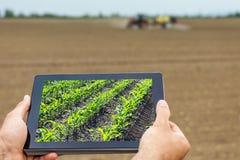 Agricoltura astuta Agricoltore che usando piantatura del cereale della compressa Agr moderno Fotografie Stock