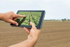 Agricoltura astuta Agricoltore che usando piantatura del girasole della compressa moder Fotografie Stock