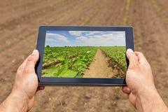 Agricoltura astuta Agricoltore che usando piantatura della soia della compressa Agri moderno immagini stock libere da diritti