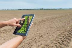 Agricoltura astuta Agricoltore che usando piantatura della soia della compressa Agri moderno Immagine Stock