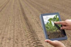Agricoltura astuta Agricoltore che usando piantatura della soia della compressa Agri moderno Fotografia Stock