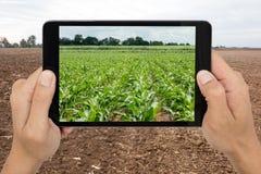 Agricoltura astuta con tecnologia aumentata c futuristica di realtà Immagini Stock