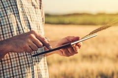 Agricoltura astuta, facendo uso delle tecnologie moderne nell'agricoltura Immagine Stock Libera da Diritti
