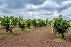 Agricoltura in Austria Fotografia Stock