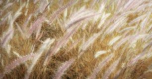 Agricoltura Autumn Farm Country Concept Immagine Stock Libera da Diritti