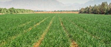 Agricoltura avanzata nell'area del deserto della valle di Arava, Israele Fotografia Stock Libera da Diritti