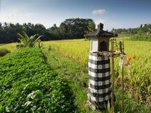 Agricoltura, Bali, Indonesia Fotografie Stock Libere da Diritti