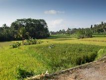 Agricoltura, Bali, Indonesia Fotografia Stock Libera da Diritti