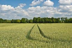 Agricoltura in Baviera Germania Fotografia Stock Libera da Diritti