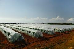 Agricoltura biologica Immagine Stock Libera da Diritti