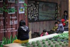 Agricoltura biologica dell'azienda agricola del carrello Fotografia Stock Libera da Diritti