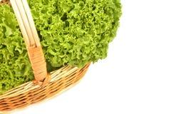 Agricoltura biologica della lattuga Fotografia Stock Libera da Diritti