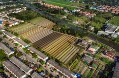 Agricoltura biologica di verdure, fotografia aerea di agricoltura Fotografia Stock