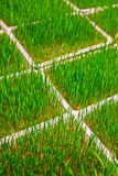 Agricoltura biologica moderna interna Fotografia Stock