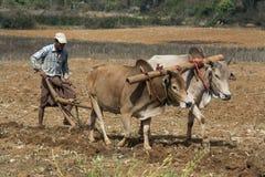 Agricoltura birmana - Myanmar Immagine Stock Libera da Diritti