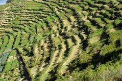 Agricoltura in Bolivia Immagine Stock Libera da Diritti