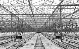 Agricoltura britannica con le sue scuole materne Immagine Stock