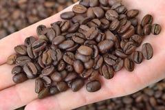 Agricoltura, caffè Immagini Stock Libere da Diritti