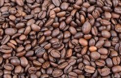 Agricoltura, caffè Immagini Stock