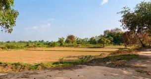 Agricoltura cambogiana Fotografie Stock Libere da Diritti
