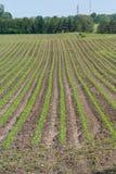 Agricoltura: campo coltivato verde Fotografia Stock Libera da Diritti