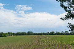 Agricoltura: campo coltivato verde Fotografia Stock