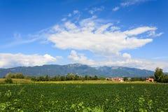 Agricoltura, campo della soia Immagine Stock