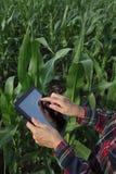 Agricoltura, campo di grano d'esame dell'agricoltore Fotografia Stock