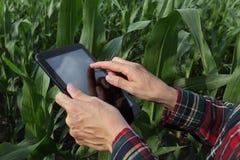 Agricoltura, campo di grano d'esame dell'agricoltore Fotografie Stock