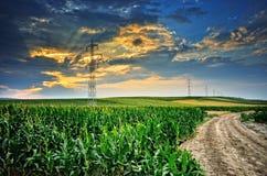 Agricoltura. Campo di grano e del mais Immagine Stock