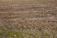 Agricoltura - campo raccolto Immagini Stock