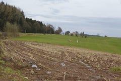 Agricoltura - campo raccolto in un paesaggio Fotografia Stock Libera da Diritti