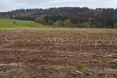 Agricoltura - campo raccolto in un paesaggio Fotografia Stock