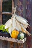 Agricoltura ceca e coltivare - zucche autunnali nel giardino Fotografie Stock Libere da Diritti