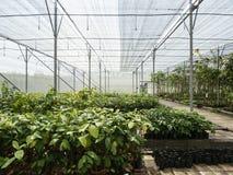 Agricoltura che coltiva gli impianti di produzione all'aperto Fotografia Stock