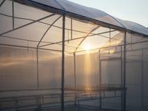 Agricoltura che coltiva la scuola materna degli impianti di produzione all'aperto Fotografia Stock