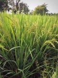 Agricoltura che faming Fotografia Stock