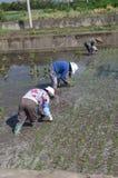 Agricoltura in Cina Immagini Stock