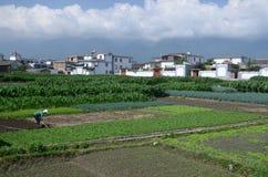 Agricoltura in Cina Fotografie Stock