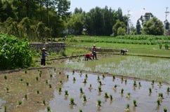 Agricoltura in Cina Immagini Stock Libere da Diritti
