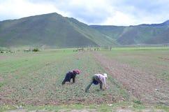 Agricoltura in Cina Fotografia Stock Libera da Diritti