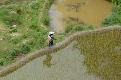 Agricoltura in Cina Fotografie Stock Libere da Diritti