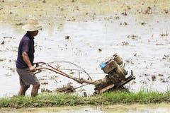 Agricoltura cinese del riso Immagini Stock Libere da Diritti